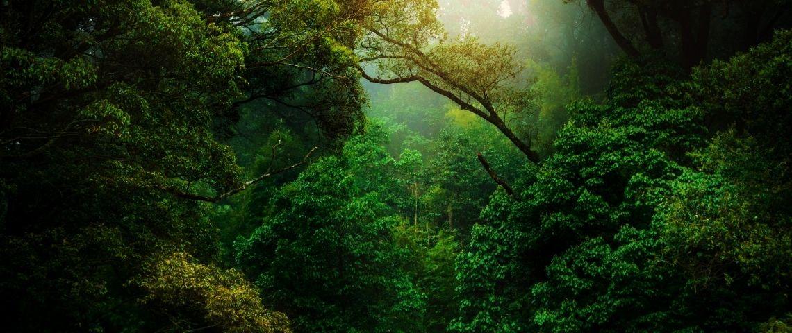 Une forêt dense
