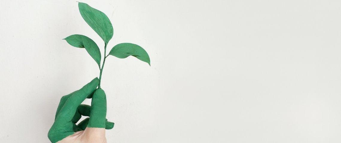 Main tenant une petite plante