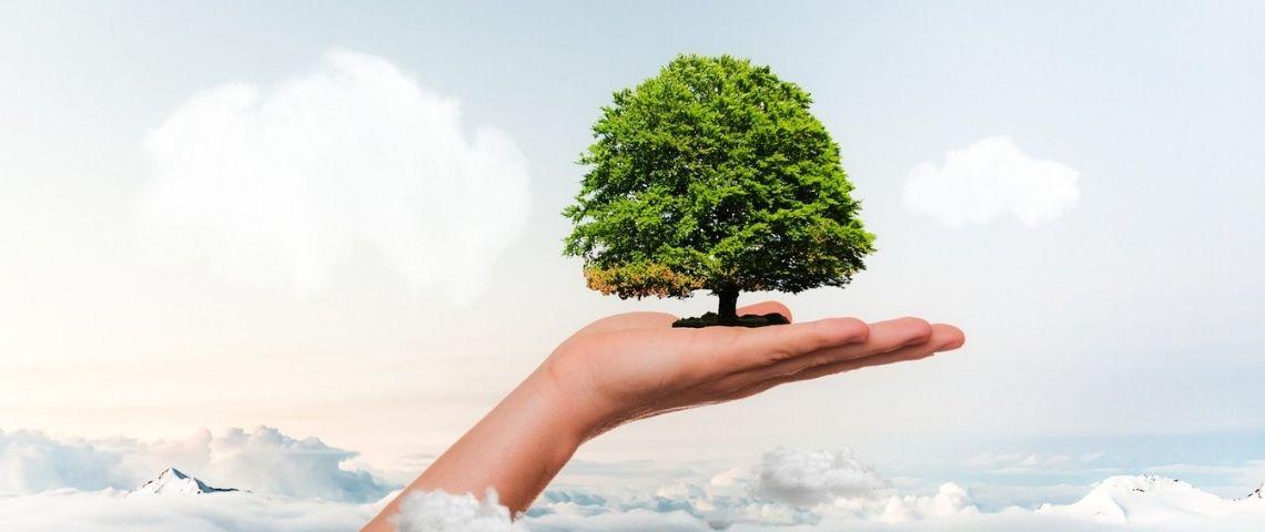 Personne tenant un arbre dans sa main, au dessus des nuages