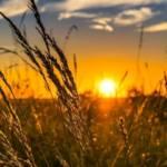 Couché de soleil sur un champs de blé