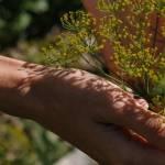 Main qui tient une plante.