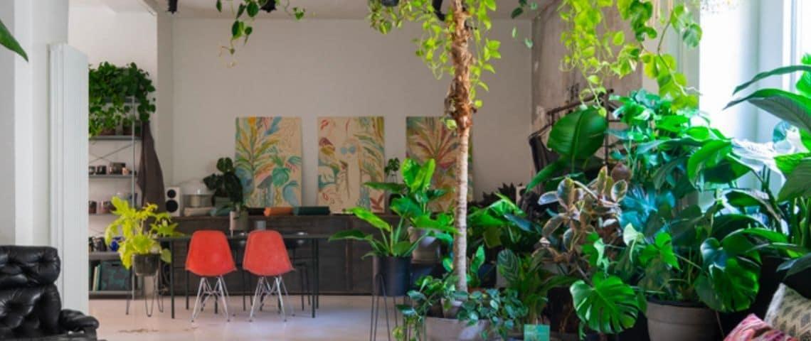 Un bureau avec de nombreuses plantes