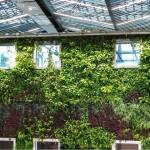Batiment avec un mur végétal dans une cours intérieure