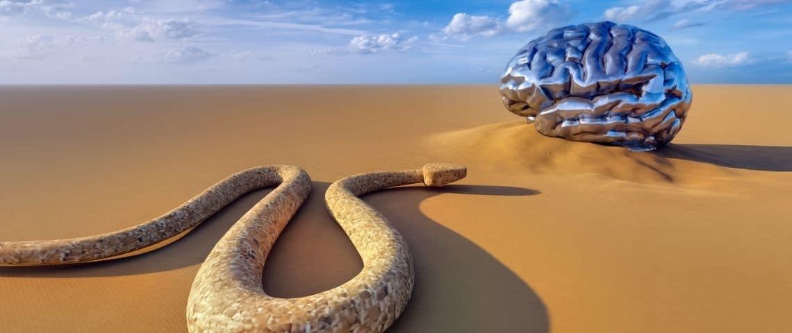 Un serpent et un cerveau humain