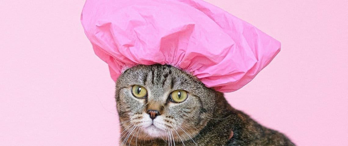 Un chat avec une charlotte de douche rose sur la tête