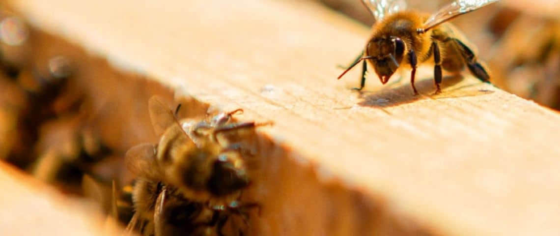 des abeilles dans une ruche