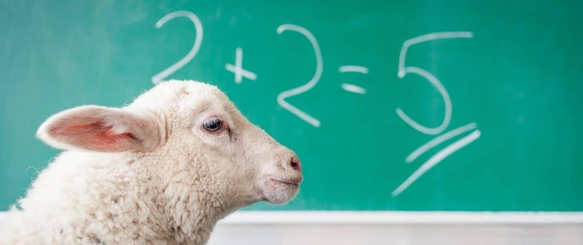 Un mouton au premier plan. Un tableau vert avec une fausse équation mathématique.