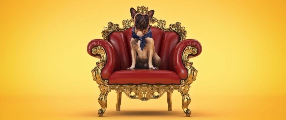 Un petit chien avec une couronne sur un trône