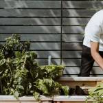 Un homme qui jardine