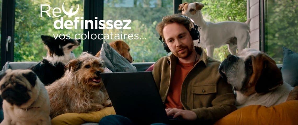 homme assis sur un canapé, devant un ordinateur, entouré de chiens, avec le message :  - Définissez vos colocataires -