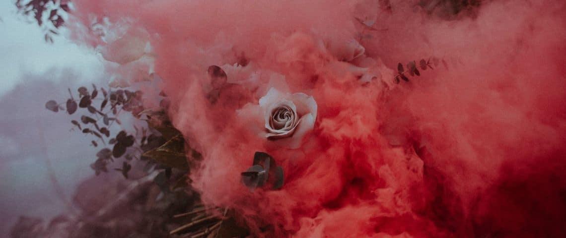 Rose blanches avec une fumée rose