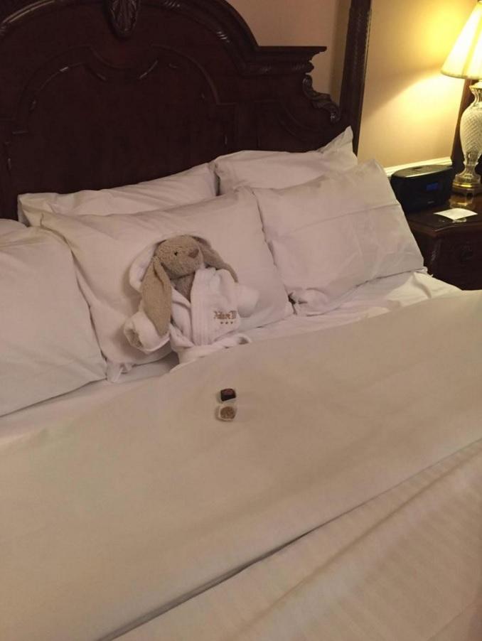 Lapin perdu à l'hôtel